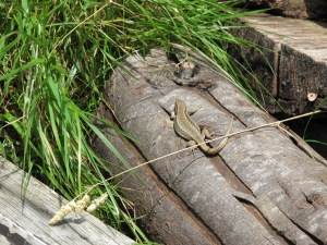 A friend on the log